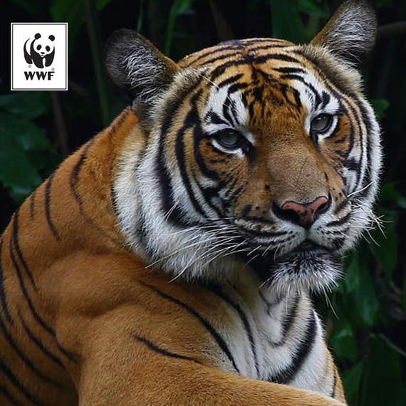 20 km de Bruxelles pour le WWF! ʕ◉ᴥ◉ʔ