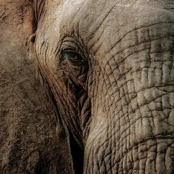 Détrompe-toi, l'éléphant a grandement besoin de toi, il est temps d'ivoire clair!