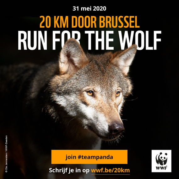 Michel runs 20 km Brussel for The Wolf and Wildlife protection
