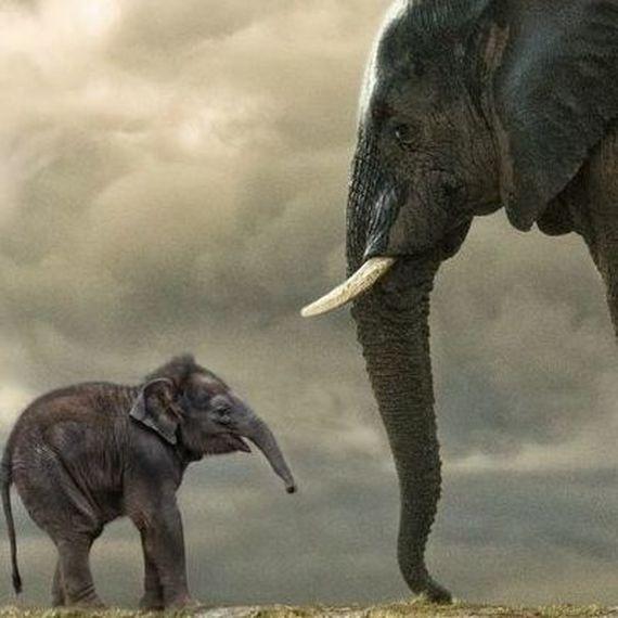 20 km voord de olifanten.